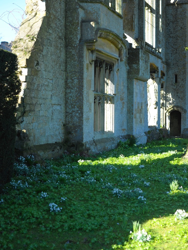 sudeley castle snowdrops